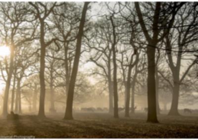 paul bate - deer in misty woods